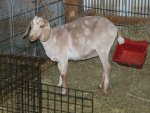 alice clipped and goat clouds 040.jpg